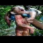 Criatura conhecida como Duende foi morta na África