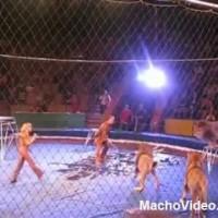 Camera flagra Leão atacando seu treinador!!!