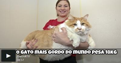gato-gordo