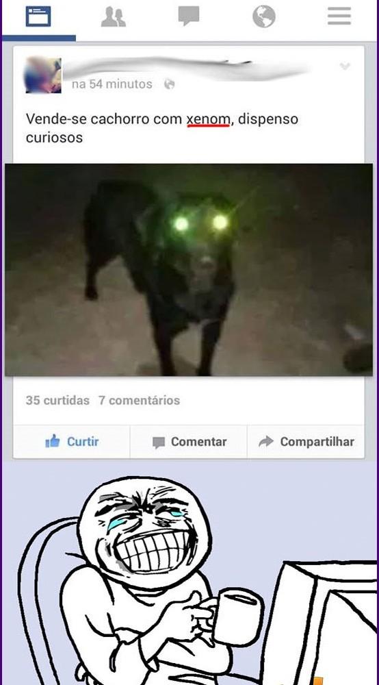 dog-xenon