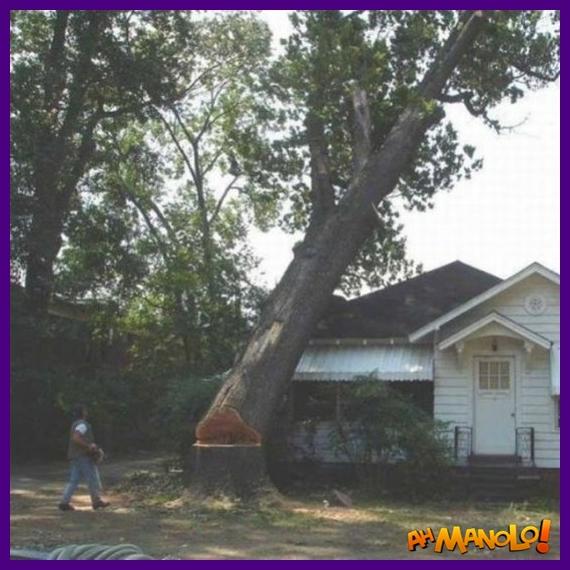 Cortando a árvore