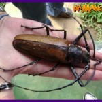 besouro-titan