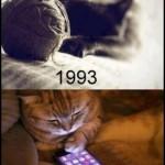 gato antes e depois